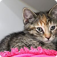 Adopt A Pet :: Roxanne - Muskegon, MI