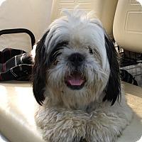 Adopt A Pet :: Fluff - Savannah, GA