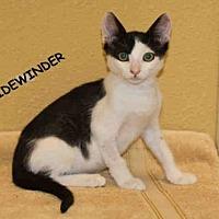 Adopt A Pet :: LUKESKYWALKE - Hanford, CA