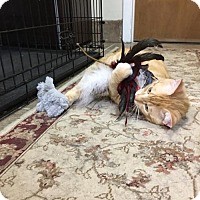 Adopt A Pet :: Al Stewart - Stroudsburg, PA