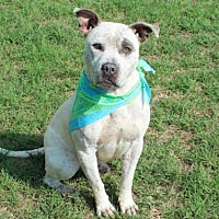 Adopt A Pet :: KIRBY - Edmond, OK