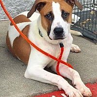 Adopt A Pet :: Butler - New Albany, OH