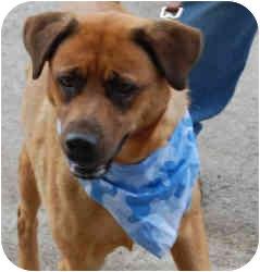 Labrador Retriever Mix Dog for adoption in Gallatin, Tennessee - Brandy