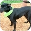 Photo 2 - Labrador Retriever Mix Dog for adoption in Cincinnati, Ohio - Mojo