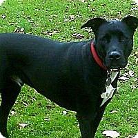 Adopt A Pet :: Radar - Dacula, GA