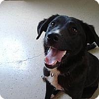 Adopt A Pet :: Molly - Beaver, UT