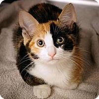 Adopt A Pet :: Fern - lake elsinore, CA