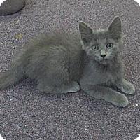 Adopt A Pet :: Violet - Memphis, TN