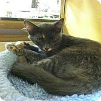 Adopt A Pet :: Hazel - Monroe, GA
