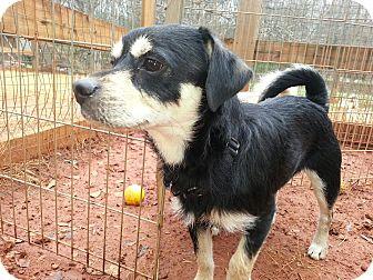 Pug/Dachshund Mix Dog for adoption in Newtown, Connecticut - Mac