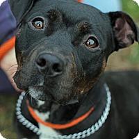 Adopt A Pet :: Roxy - Tinton Falls, NJ