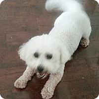 Adopt A Pet :: SKIPPER - East Hanover, NJ