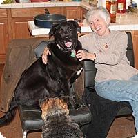 Adopt A Pet :: Shadow - Murphy, NC