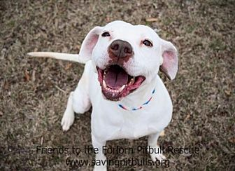 American Pit Bull Terrier Mix Dog for adoption in Dallas, Georgia - Shelby