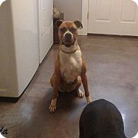Adopt A Pet :: Ida - Mooresville, IN