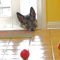 Adopt A Pet :: Avery - Irvine, CA