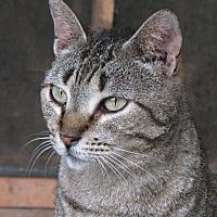 Adopt A Pet :: CeCe - Nashville, GA