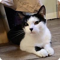 Adopt A Pet :: Nampara - Mississauga, Ontario, ON