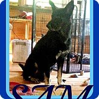 Adopt A Pet :: SAM - Sebec, ME
