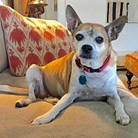 Adopt A Pet :: Precious - Brownsboro, AL