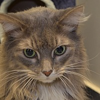 Adopt A Pet :: Jasmine - Martinsville, IN