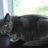 Adopt A Pet :: Sophie - Santa Rosa, CA