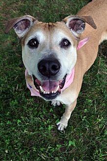 Boxer Mix Dog for adoption in Fairfax Station, Virginia - Mak