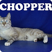 Adopt A Pet :: Chopper - Carencro, LA