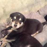 Adopt A Pet :: Morgan - Brandon, SD
