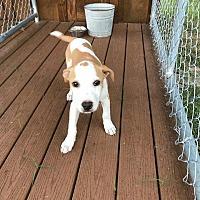 Adopt A Pet :: Pebbles - Waycross, GA