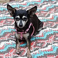 Adopt A Pet :: Nikki - Memphis, TN