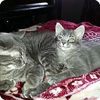 Adopt A Pet :: Mallerd - Clearfield, UT