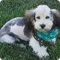 Adopt A Pet :: **LEVI** - Stockton, CA