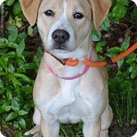 Adopt A Pet :: Febee - Cumming, GA