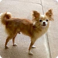 Adopt A Pet :: Zipper - Edmond, OK