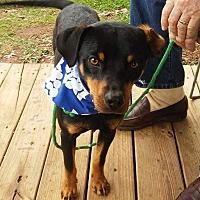 Adopt A Pet :: Copper - Thomaston, GA