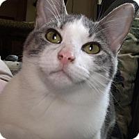 Adopt A Pet :: Adore - Evans, WV