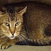 Adopt A Pet :: FUDGE - Ogden, UT