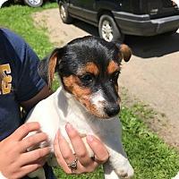 Adopt A Pet :: Phoebe - Salamanca, NY