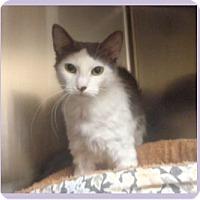 Adopt A Pet :: STARINA - Marietta, GA