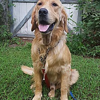 Adopt A Pet :: Ike - Washington, DC