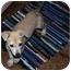 Photo 3 - Labrador Retriever/Shepherd (Unknown Type) Mix Puppy for adoption in Broomfield, Colorado - Doc