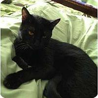 Adopt A Pet :: Johnny - Mobile, AL