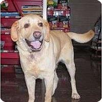 Adopt A Pet :: JACOB - San Diego, CA