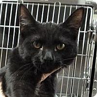 Adopt A Pet :: Squirt - St. Petersburg, FL
