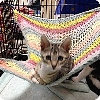 Adopt A Pet :: Toby - Fort Lauderdale, FL