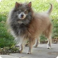 Adopt A Pet :: Sterling - Escondido, CA