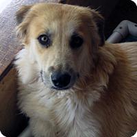 Adopt A Pet :: Nahla - Santa Fe, NM