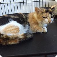 Adopt A Pet :: Cleopatra - Speonk, NY