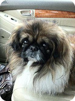 Pekingese Dog for adoption in Rockville, Maryland - Momo